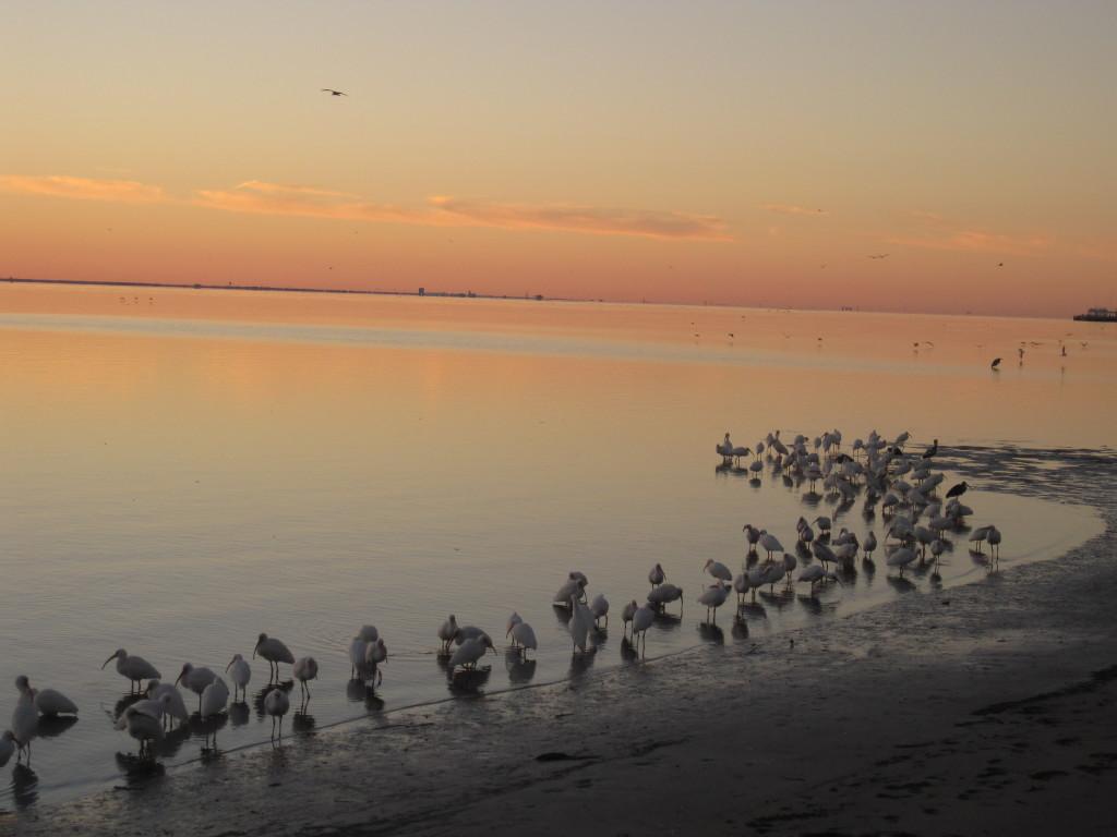 Birds.sunrise4240