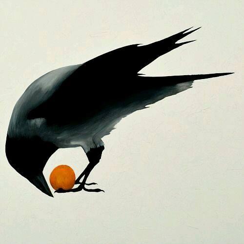 Crow with orange