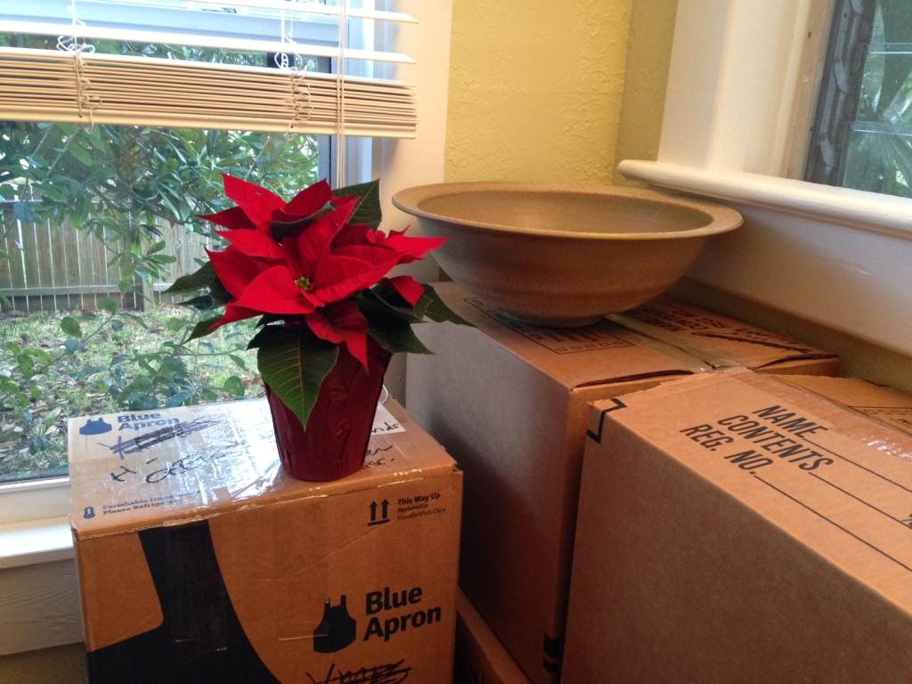 Poinsetta w:boxes