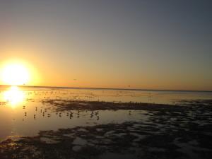 winter low tide1