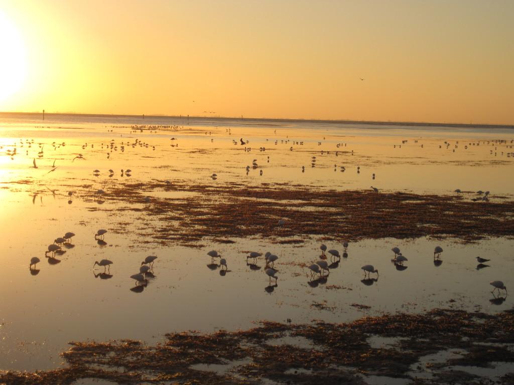 winter low tide2